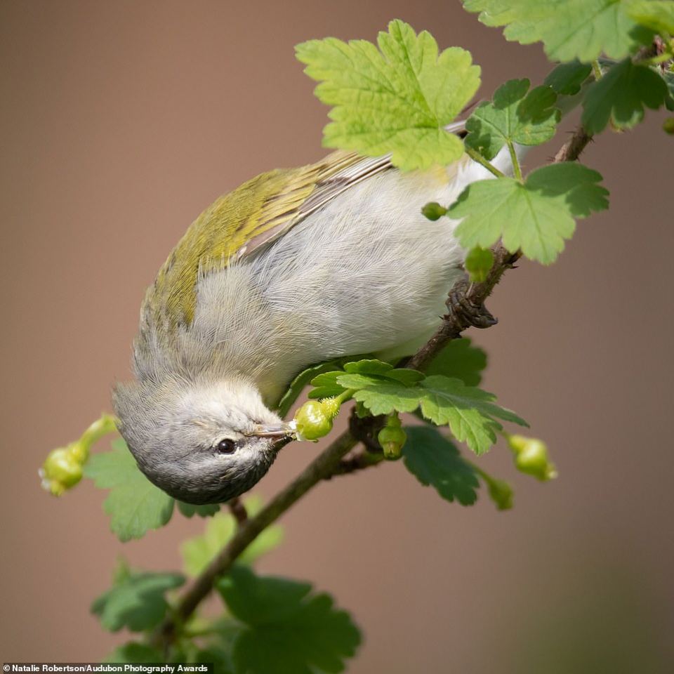 الصور الفائزة في مسابقة الطيور